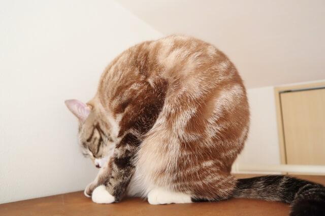【トレーナー解説】【必見】猫背を改善にするためのストレッチ